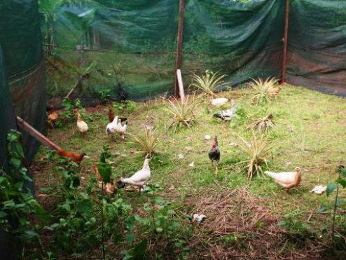 Growing vegetable and breeding animals