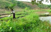 Cassava-hill, vegetable field & fish-ponds at the brook.