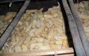 Trocknen des Mais für längere Haltbarkeit