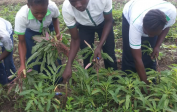 Die Schüler der landwirtschaftlichen Abteilung erhalten praktische Ausbildung