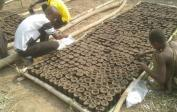 1100 palmových semen pro 7 ha plantáž
