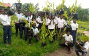 Pupils bring palm nut trees from our school to the plantation on our property.
