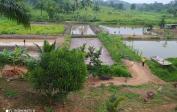 Right: Fishponds. Left: Rice- & cornfield