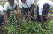 18. Pupils harvesting vegetables